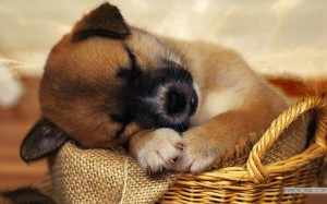 dog-tired-is-sleeping-wallpaper-1024x640